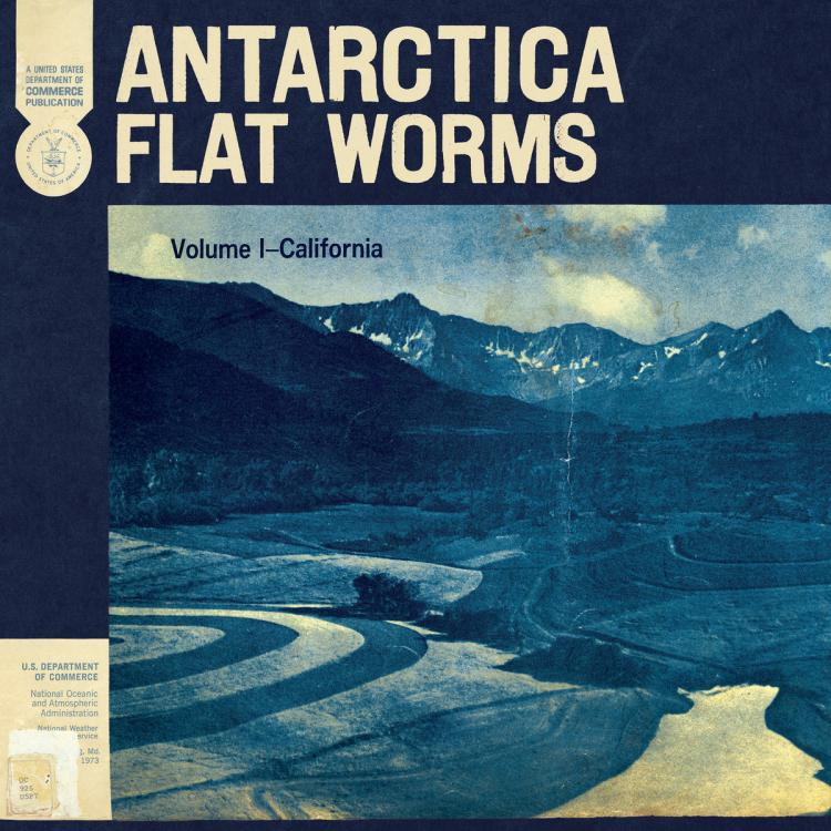 antarticaflatworms.jpeg